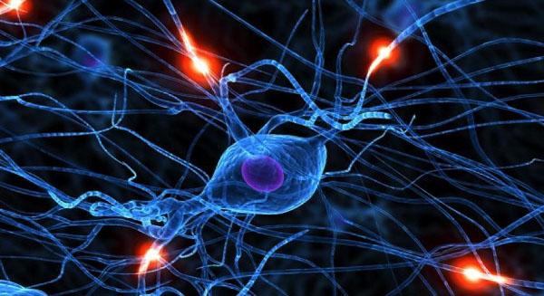 Профилактика заболеваний мозга и нервной системы в целом