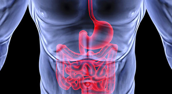 Здоровый желудок и ЖКТ