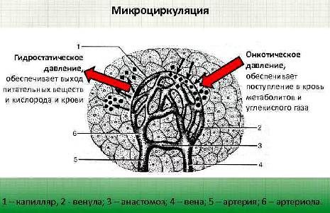 Гидростатический эффект