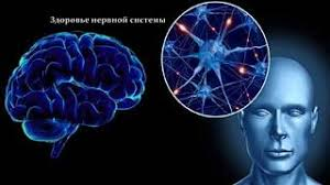 Как сохранить безупречную работу нашего головного мозга?